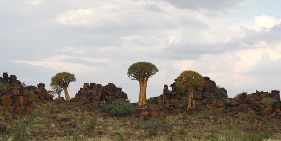 The Quiver tree Forest in the South of Namibia